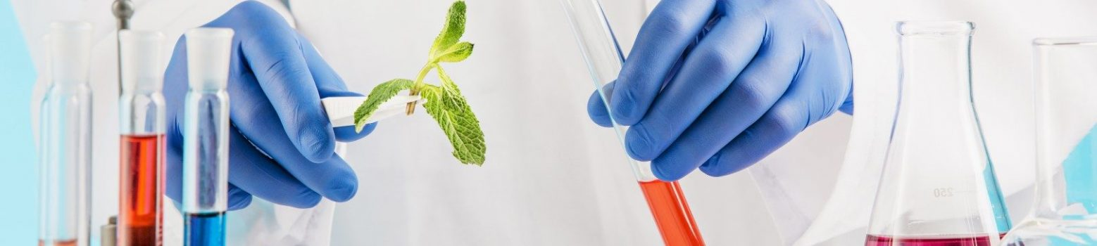 Plant sciences in lab. Experiments in a chemistry lab. conducting an experiment in the laboratory with humen hands