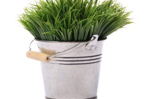 Green grass in the pail over white background