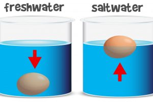 Science experiment for freshwater and saltwater illustration